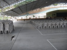 A cat in the Assembly Hall!!